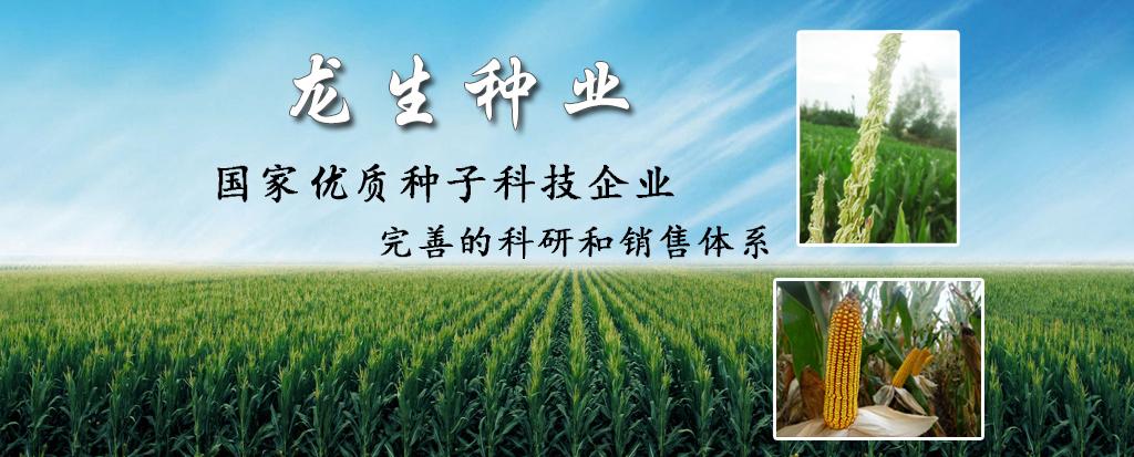 玉米种子代理